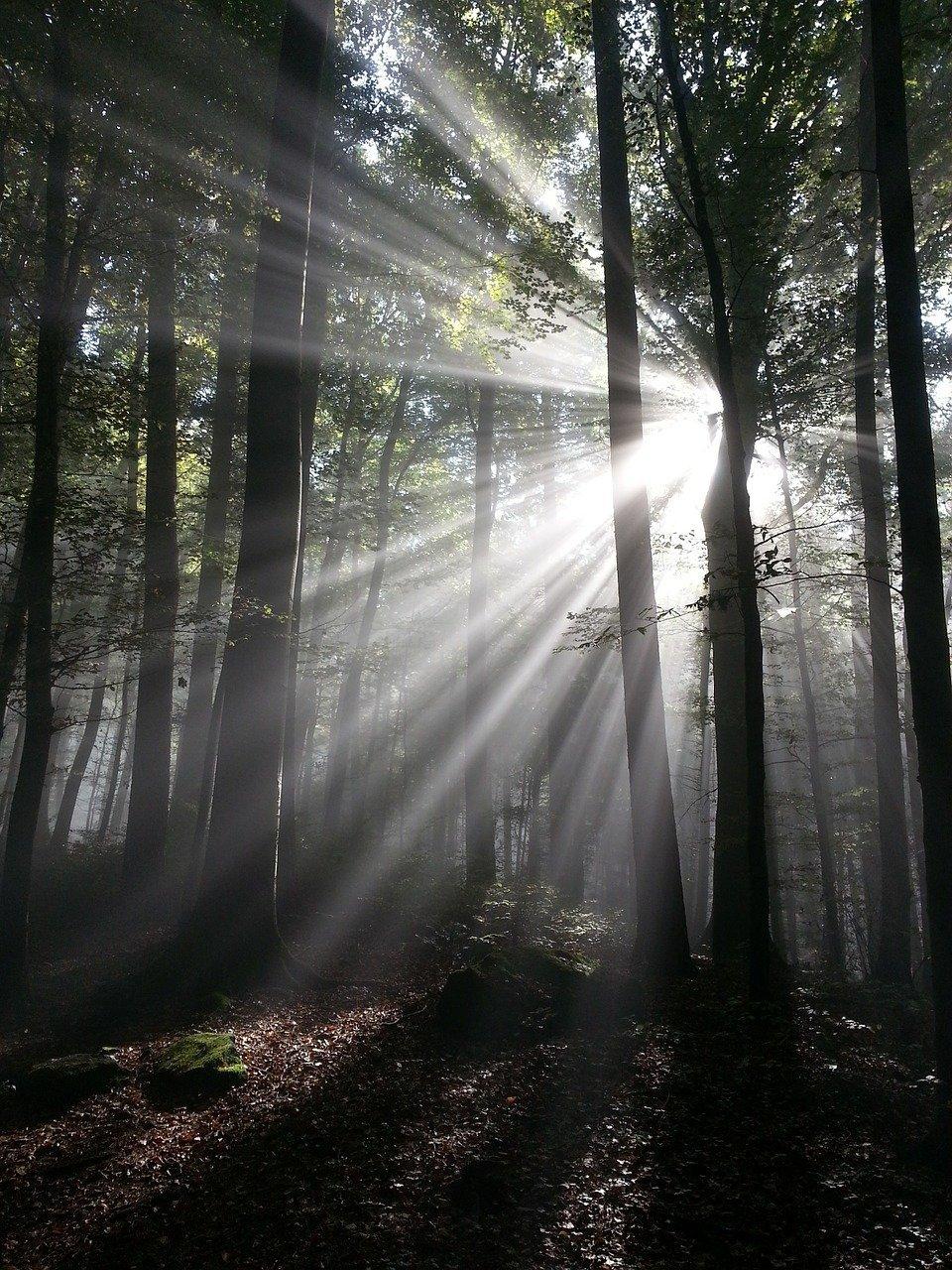 sunbeam-540589_1280